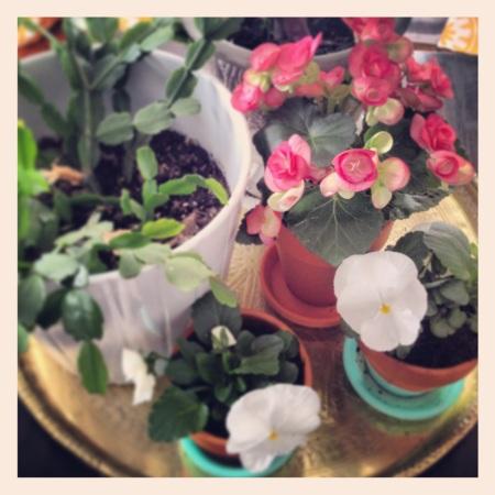 Plant Hoard